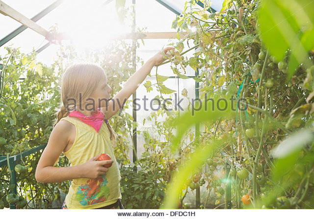 Little girl gardening in community greenhouse - Stock Image