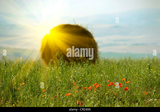 Sun shining over haybale in wheatfield - Stock Image