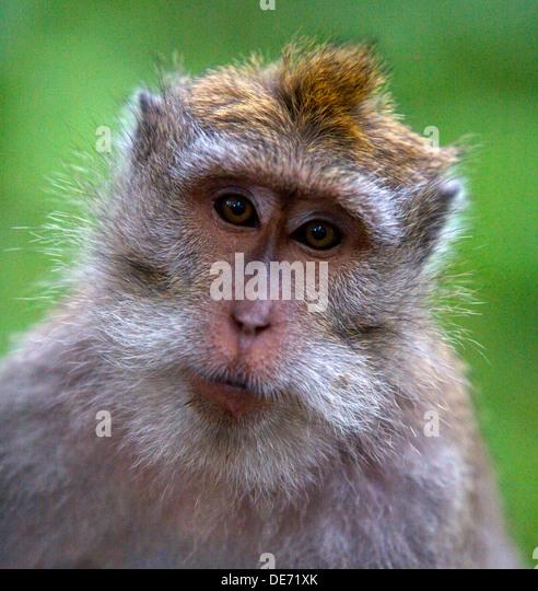 monkey clock sleep trainer instructions