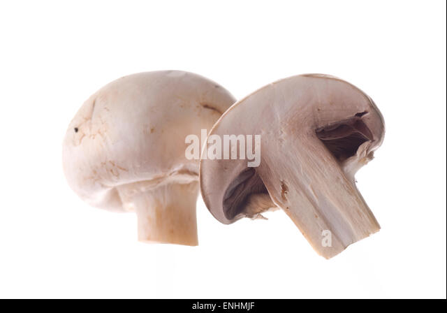 Mushroom on white background. - Stock Image