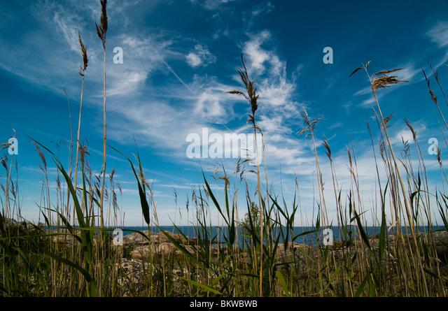 Straws in heaven - Stock Image