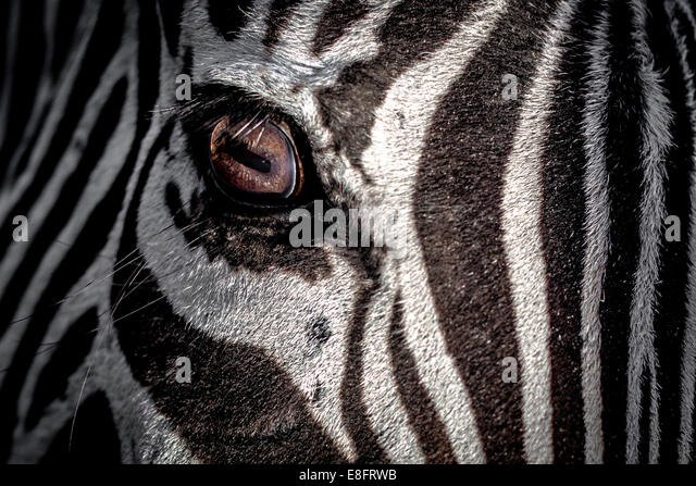 USA, Eye of zebra - Stock-Bilder