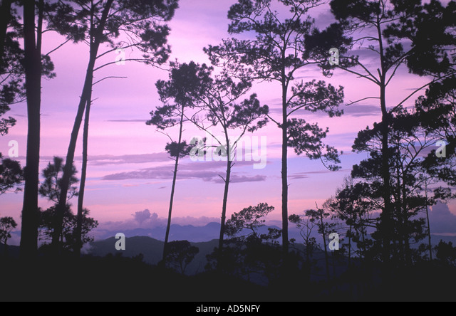 Dominican Republic trail to Pico Duarte trees at purple sky twilight - Stock Image