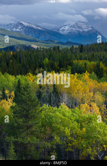 autumn colours nr Patricia Lake, Jasper National Park, Alberta, Canada - Stock Image