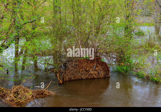 tropical monsoon forest rain stock photos tropical monsoon forest rain stock images alamy. Black Bedroom Furniture Sets. Home Design Ideas