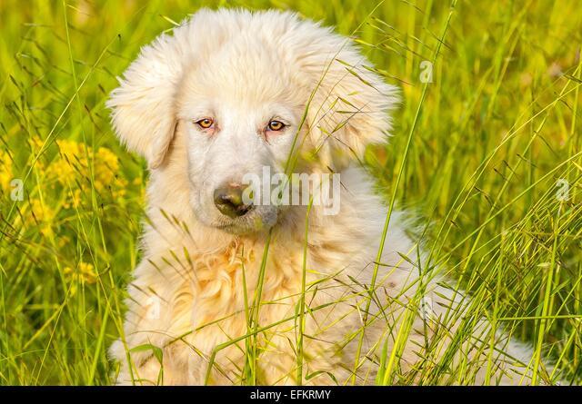 Chien assis stock photos chien assis stock images alamy for Cout d un chien assis