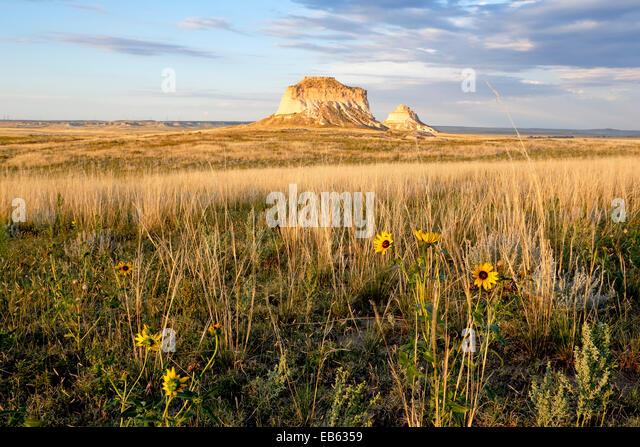 Yellow wildflowers and Pawnee Buttes, Pawnee National Grassland, Colorado USA - Stock-Bilder