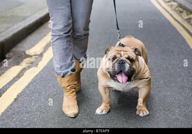 Bulldog and owner - Stock-Bilder