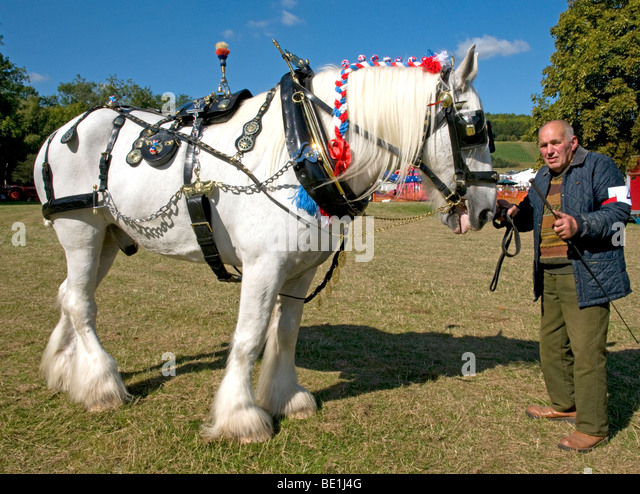 Leapley Yeoman' a 11yr shire horse owned by  J. Wilson,Basingstoke wins 1st PRIZE in the Show Harness class atThe - Stock Image