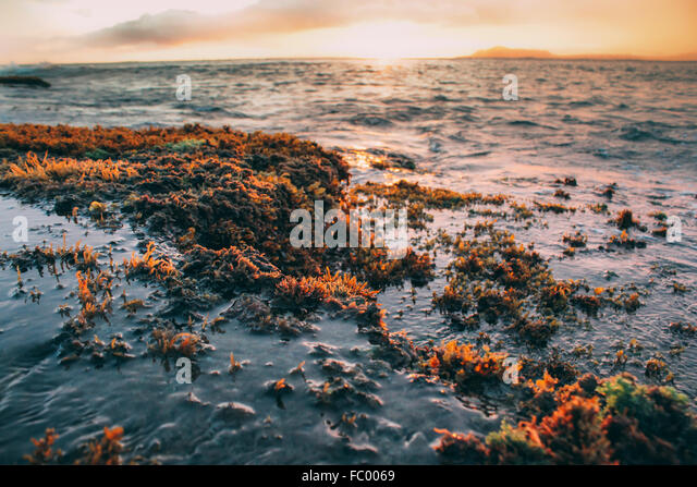 Reef at low tide on Portlock Oahu Hawaii USA stock photo. - Stock Image