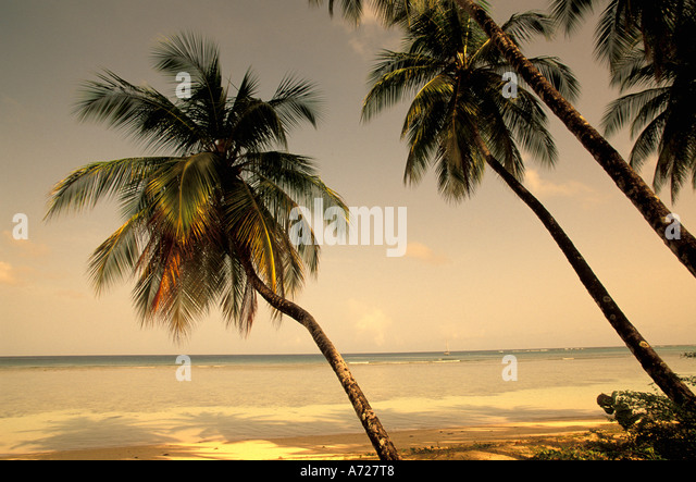 Tropics tropical beach beaches - Stock Image