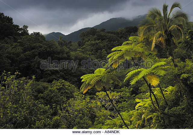 Rainforested mountains, Dominica, Windward Islands, Caribbean - Stock Image