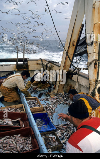 Fishermen sorting their catch on the deck of a fishing trawler while a flock of seagulls circles overhead, Marseille, - Stock Image
