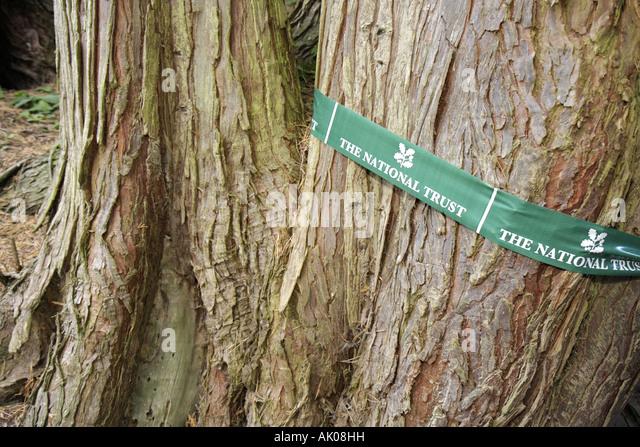 UK, England, Rothbury, Cragside, tree trunk, - Stock Image