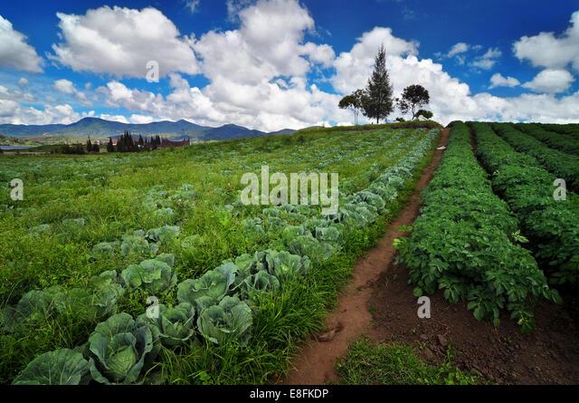 Indonesia, West Sumatra, Nagari Timbulun, Alahan Panjang, View of field - Stock Image