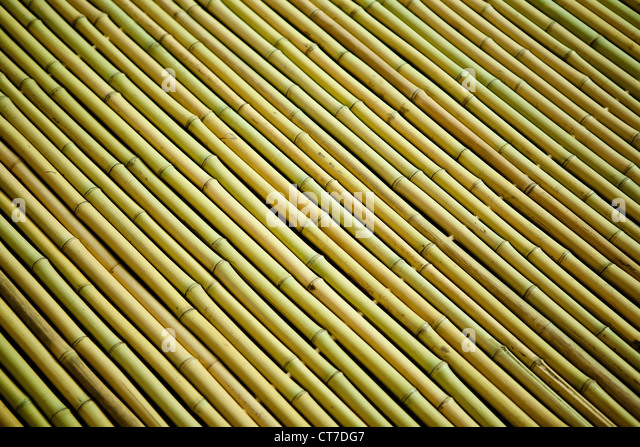 Rows of bamboo wood - Stock Image