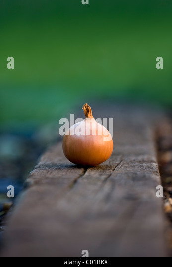 An onion in a garden - Stock Image