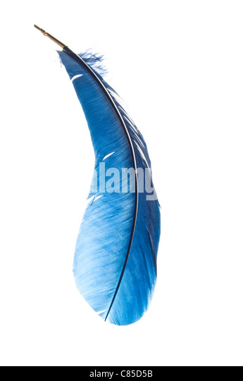 quill pen from a blue feather - Stock Image