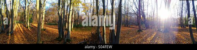 Morning sun in autumnal woodland. - Stock-Bilder