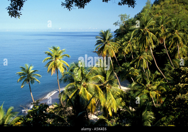 St Lucia palm tree coastline with black sand beach - Stock Image