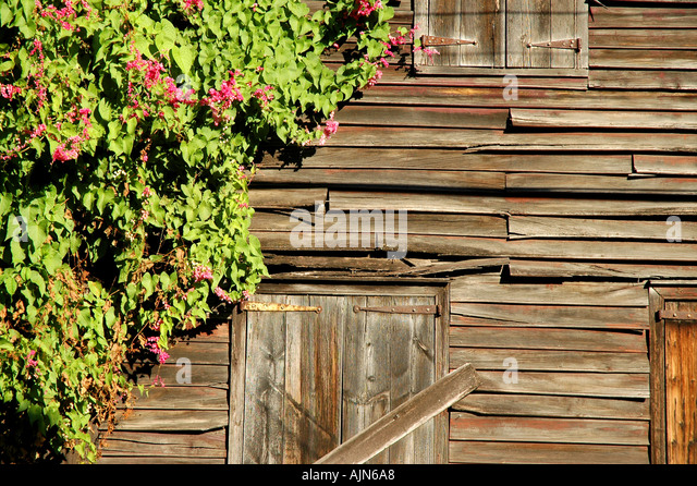 St Kitts West Indies Caribbean Basseterre Old building with flower border - Stock Image