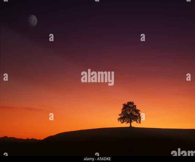 DE - BAVARIA:  Lone Tree at sunset - Stock Image