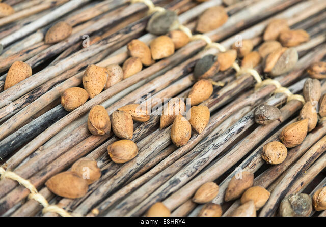 almonds being dried in the sun in the traditional way - Stock Image