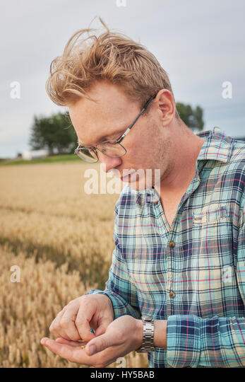 Finland, Uusimaa, Siuntio, Mid adult man holding wheat grain - Stock Image
