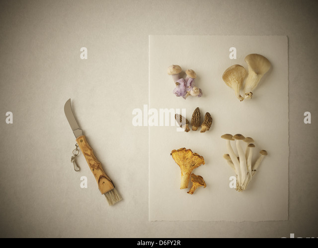 Mushrooms selection - Stock Image