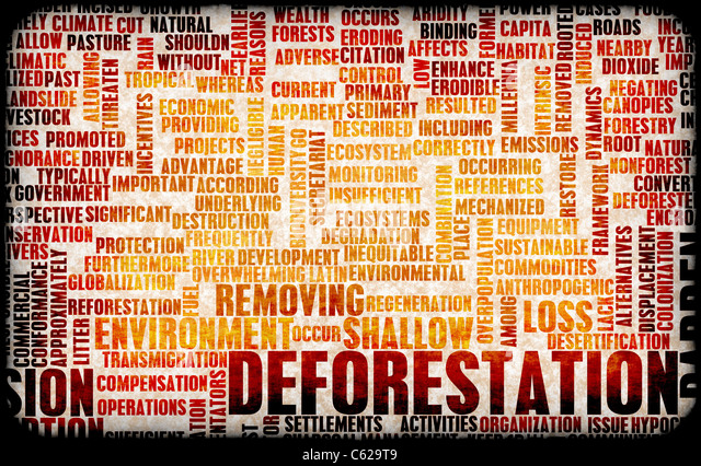 Deforestation Forest Loss Damage Concept as Art - Stock Image