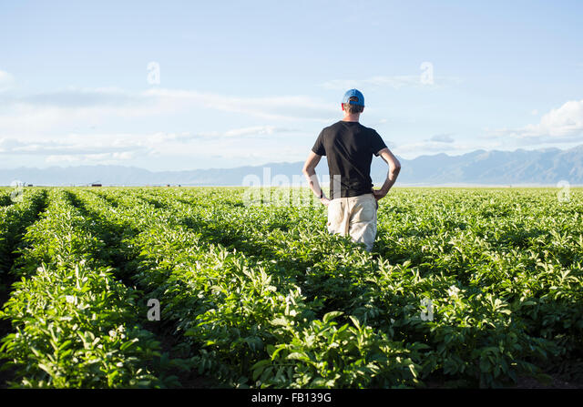 Rear view of mature man standing in field - Stock Image