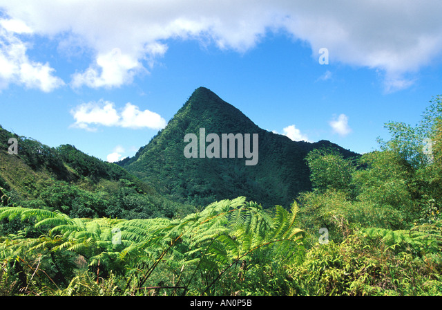 St Lucia Saint Lucia Petit Piton mountain with Ferns in Foreground - Stock Image
