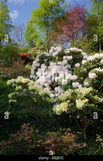 rhododendrons garden stock photos rhododendrons garden. Black Bedroom Furniture Sets. Home Design Ideas