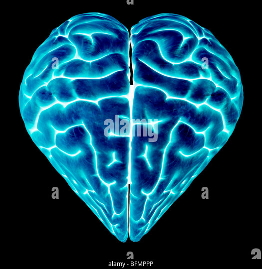 Heart-shaped brain, conceptual artwork - Stock-Bilder