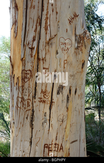 Wood carvings tree stock photos