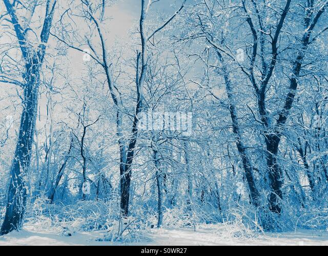 Snowy Landscape in Blue - Stock Image