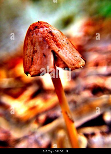 Mushroom - Stock Image