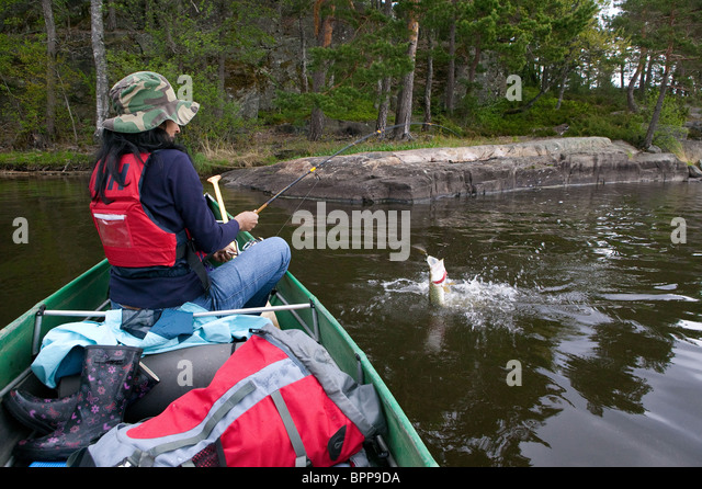 Girl fighting with a northern pike caught in the lake Vansjø in southeastern Norway - Stock Image