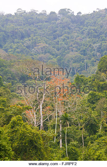 Rain forest at Cana in the Darien national park, Darien province, Republic of Panama. - Stock-Bilder