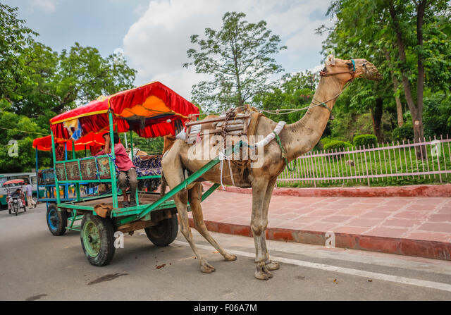 Camel pulling cart in tourist area. - Stock Image