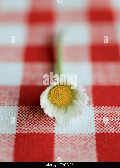 daisy - Stock Image