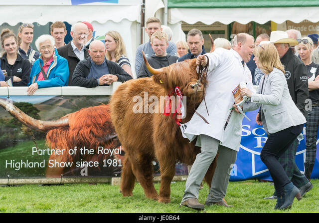 Royal Highland Show 2017 Highland Champion Eleanor of Ubhaidh  Edinburgh, Scotland, UK. 22nd June, 2017. Prize winning - Stock Image