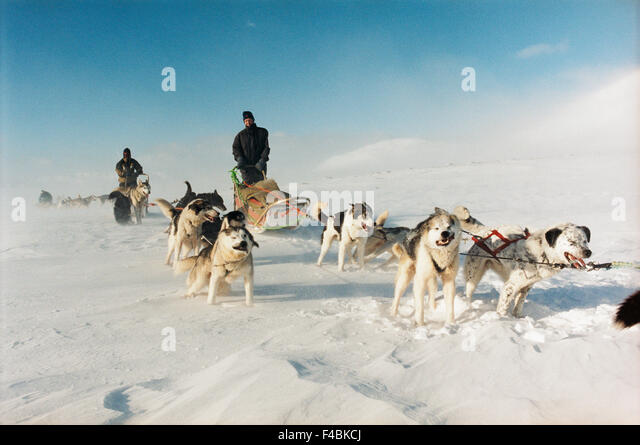 color image dog dog team domestic animals draught dog horizontal pet sky snow storm wind winter - Stock-Bilder