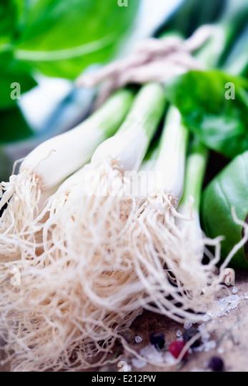 Green Onion close up shoot - Stock Image