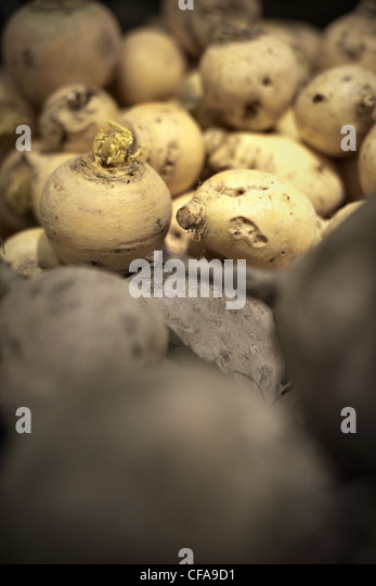 Close up of pile of turnips - Stock Image