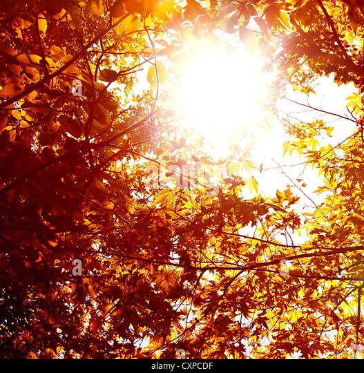 Image of abstract autumnal background, nature environment, beautiful golden leaves backdrop, shiny sunlight - Stock Image
