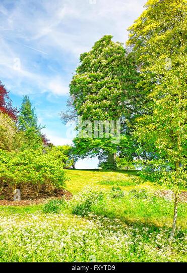 Leeds castle garden stock photos leeds castle garden for Garden trees england