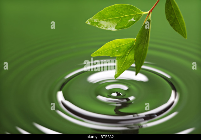 Green leaf with water ripple - Stock Image