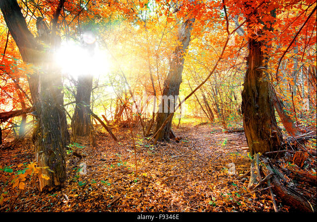 Bright colors of autumn in calm forest - Stock Image