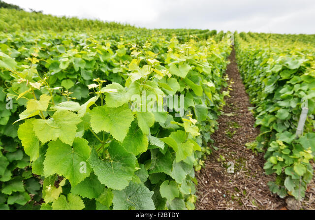 Marne valley stock photos marne valley stock images alamy for Chambre agriculture champagne ardenne